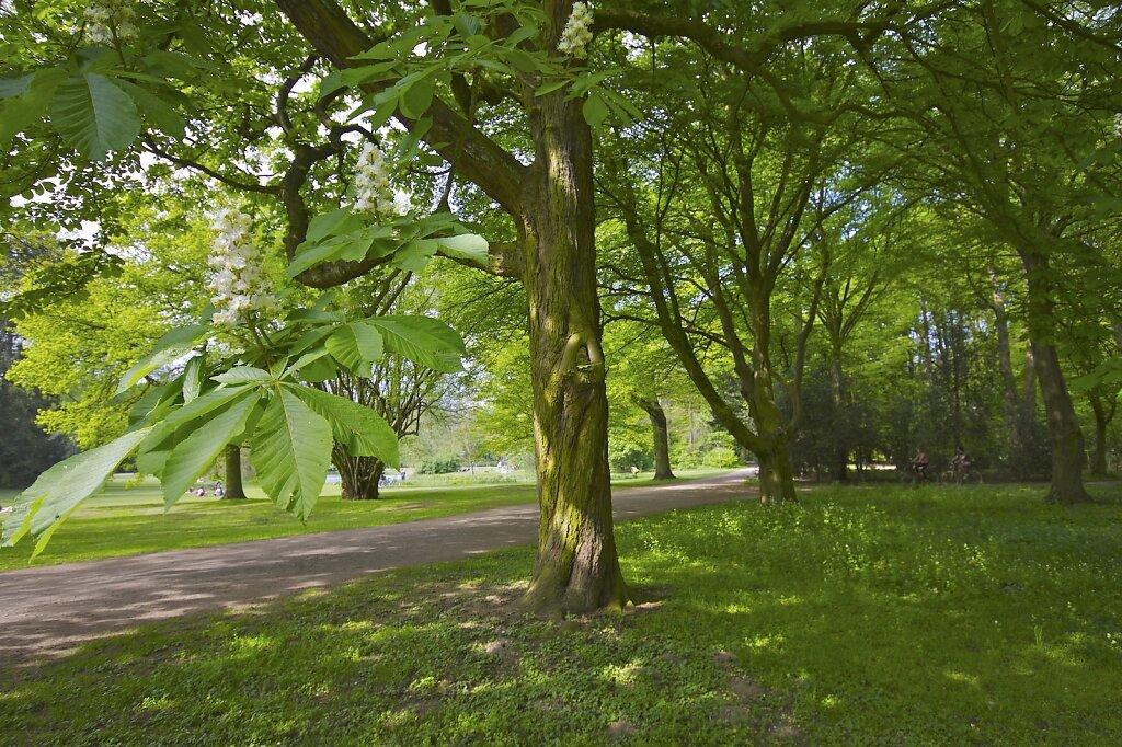 Bürgerpark & Stadtwald Bremen